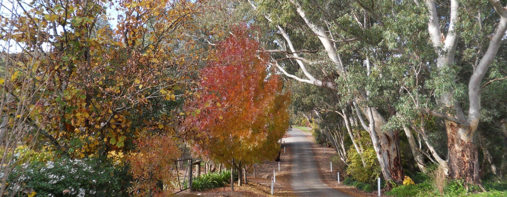 clare-valley-experiences-home-country-drive